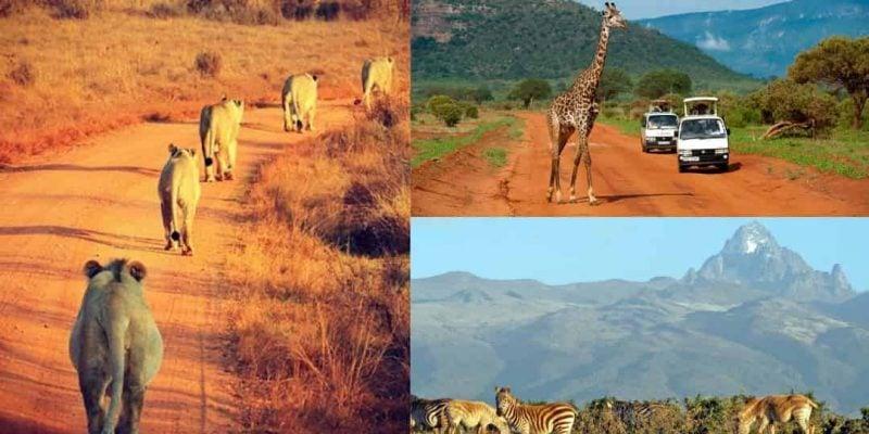 List Of 10 Affordable Safari Packages In Kenya
