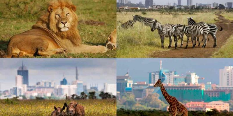Simplified Nairobi National Park Travel Guide