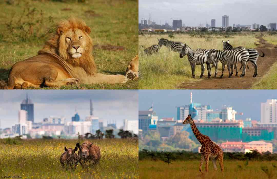 Simplified Nairobi National Park Travel Guide