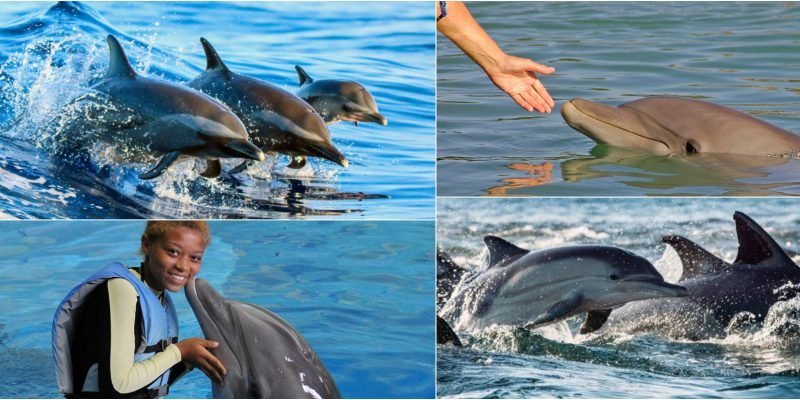 Dipping With The Dolphins? Here Are Some Tips