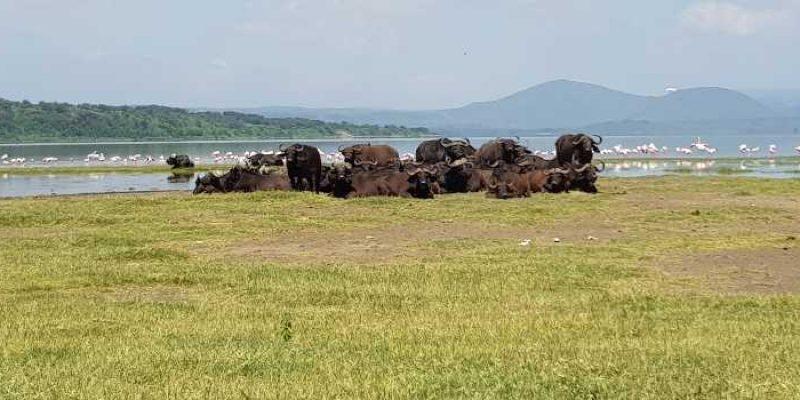 An Insight into Soysambu Conservancy