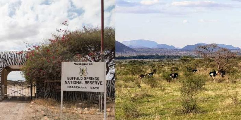Buffalo Springs Reserve: A Hidden Gem in Isiolo County