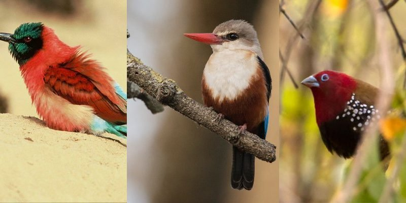 List Of Top Bird Watching Locations In Kitui County