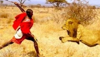 The Truth About The Relationship Between The Maasai And Lions