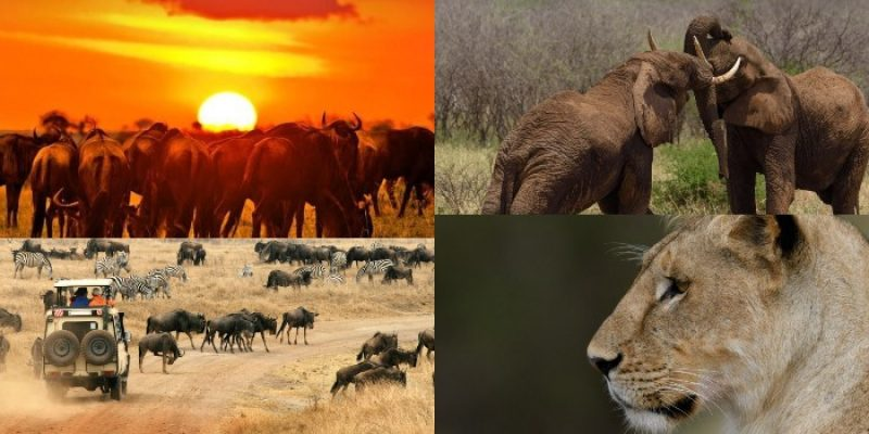 Vital Tips To Consider When Going For a Photo safari In Kenyan Parks