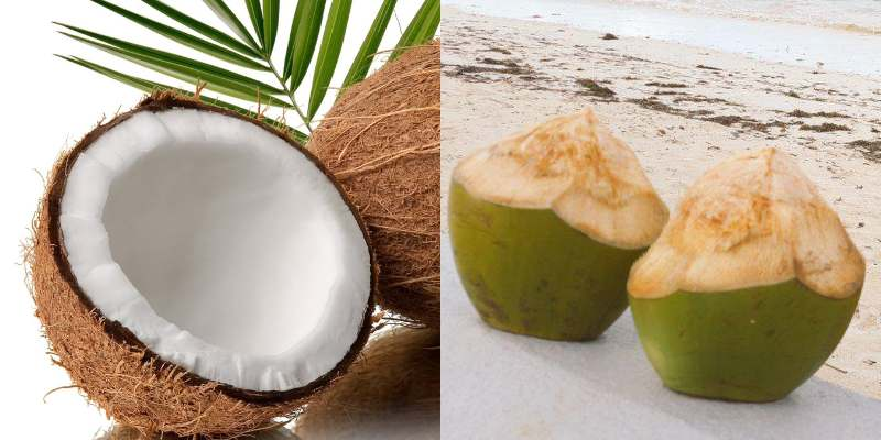 Kenyan Coast Coconuts and Their Uses