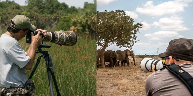 Vital Tips To Get You Started As A Wildlife Photographer