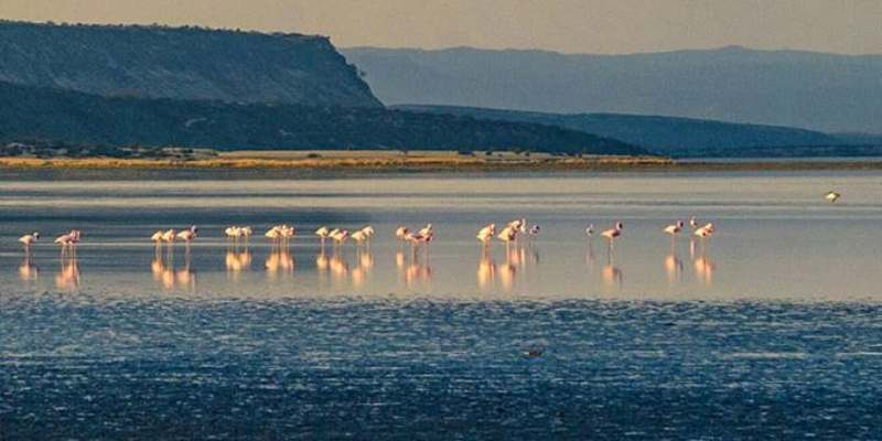 7 Solid Reasons to Visit Lake Magadi
