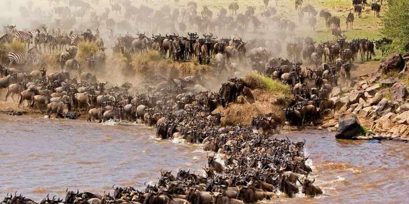 Thrilling Facts About The Great Wildebeest Migration