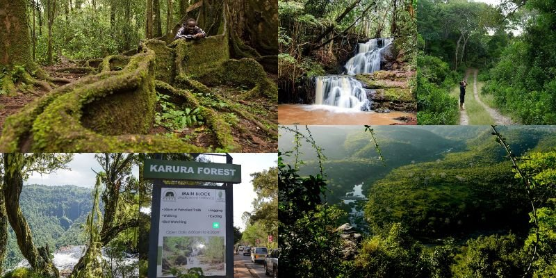 Amazing Forest Destinations For Thrilling Experiences In Kenya