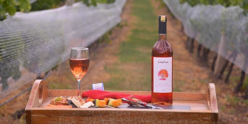 Everything You Need to Know about Leleshwa Wine Tours