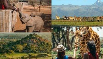 List Of Animal Sanctuaries To Visit In Kenya
