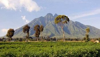 Uncovering the Gentle Giant Mt Elgon