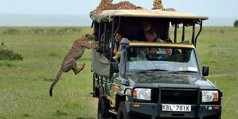 What To Do When Approached By A Wild Animal During A Safari